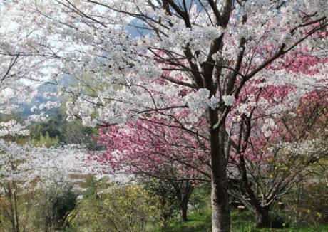 プライベートパーク花の杜(Private park Floral grove)
